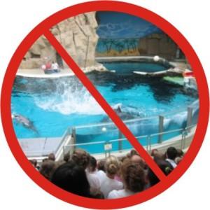 delfinarium verbot verbot