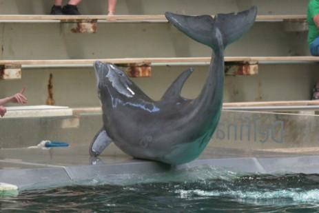duisburg delfinpg