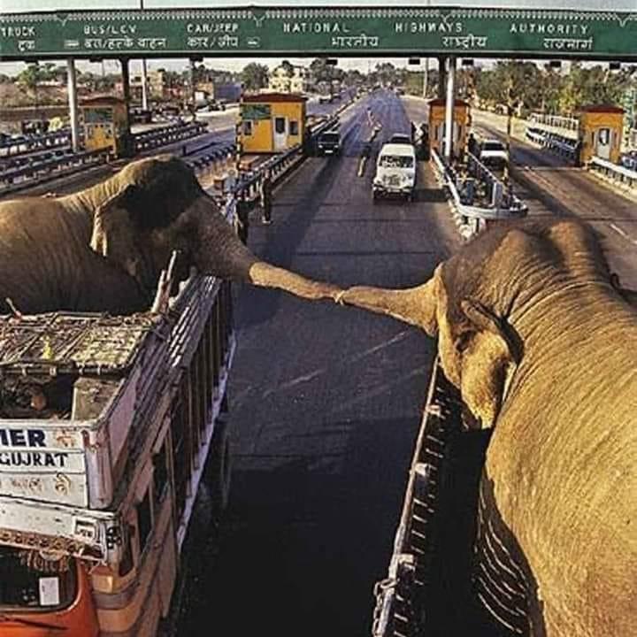 elefanten die sich berühren jpg