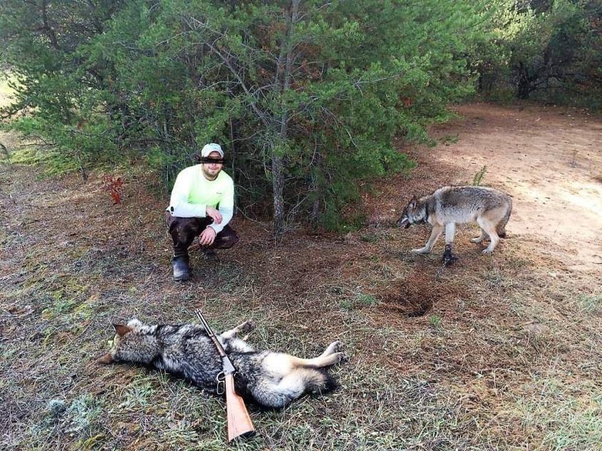 Jägermit erlegten Wölfen o