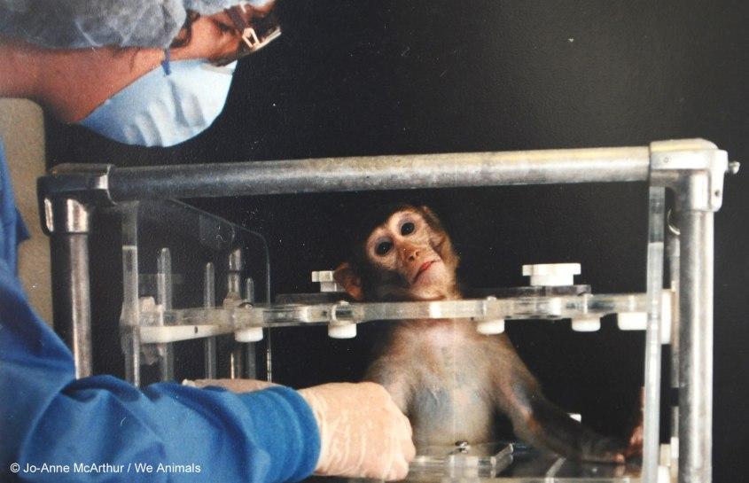 _Mexico -Monkey-JMcArthur_Credit-Jo-Anne-McArthur-We-Animals-