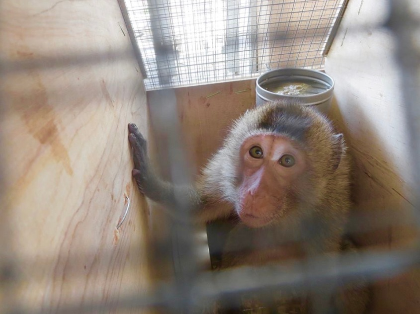 Monkey-Primate-Box-Cage-Crate-jpeg