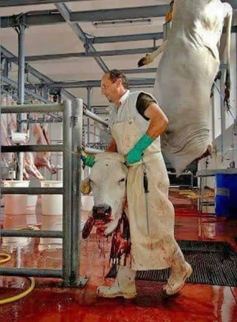 Schlachter mit Kuh Kopf_n