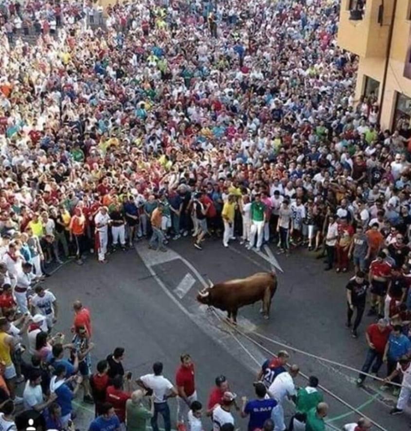 Stier eingekesselt in Menschen Meute n