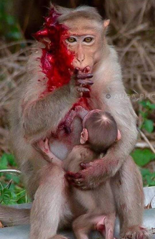 Verbutete Affen Mutterpg