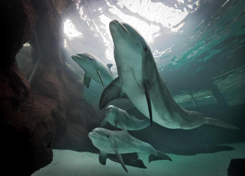 Zoo_duisburg delfine Große Tuemmler