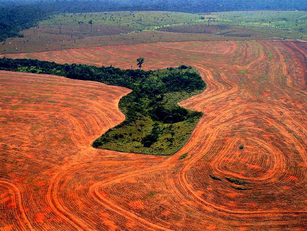 amazonas.3 png