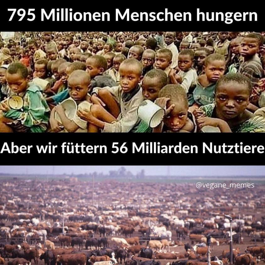 bild mit hungernden Kindern o