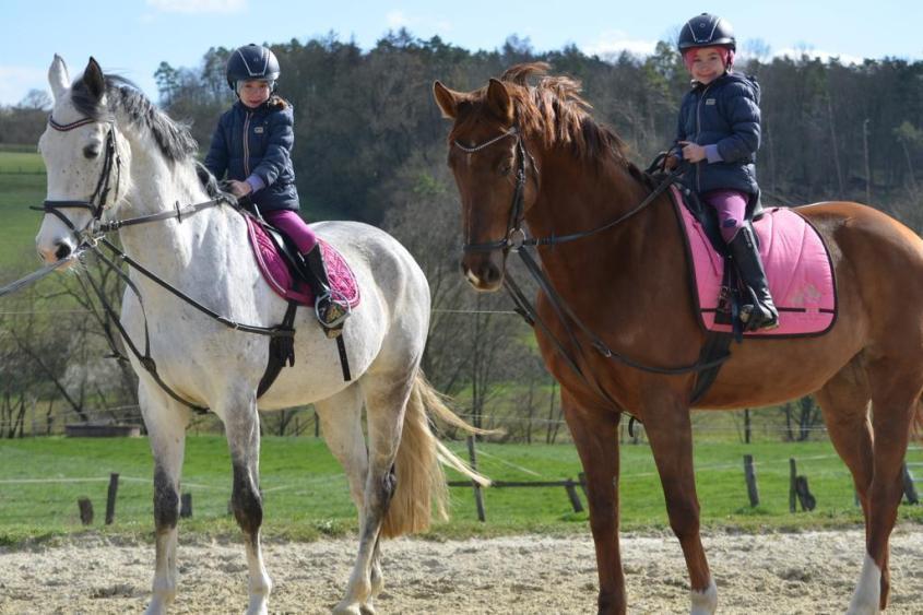 Das-Wohl-der-Pferde-pg