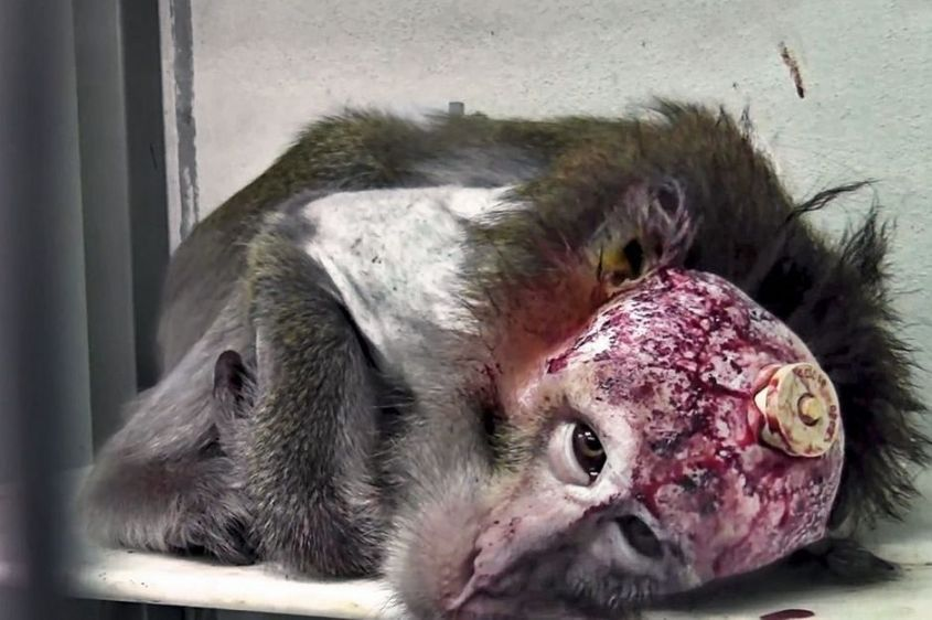 Experimentation-animale-une-barbarie-injustifiee