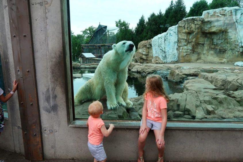 kinder und Polar Bär-Zoojpg