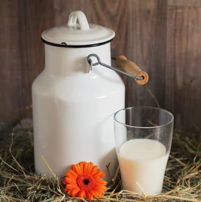 Milch_ungesund_oder_Milch_gesund