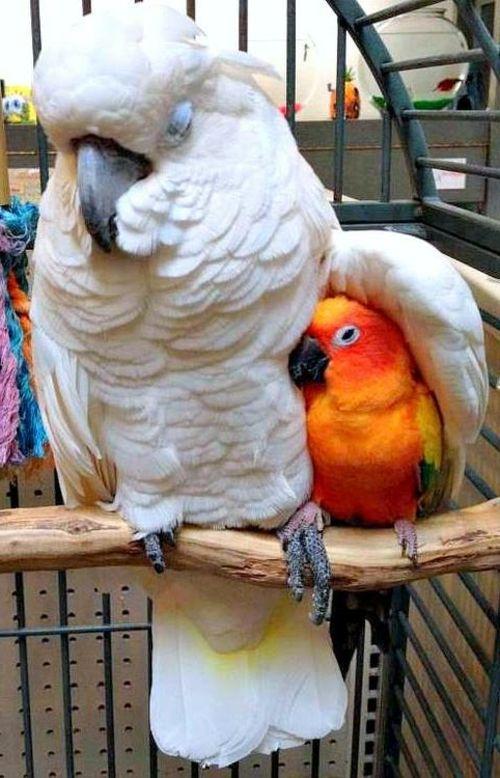 Papageien jpg
