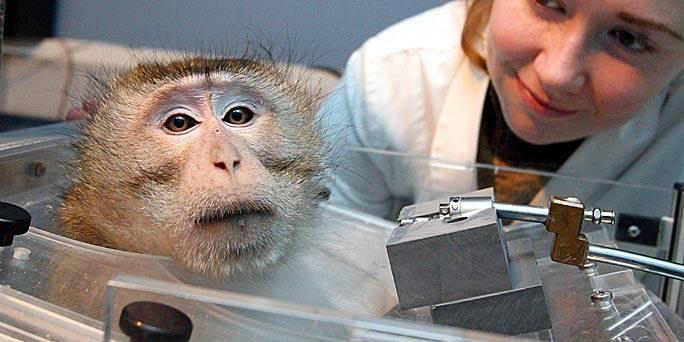 Sadistin Laborfrau mit Affen
