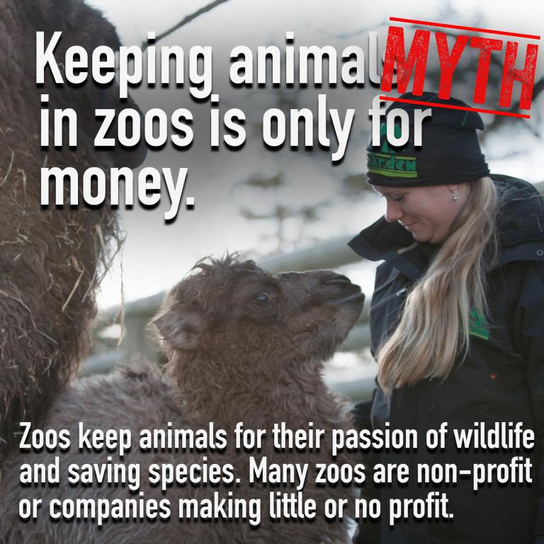 Zoo Myth 2 png