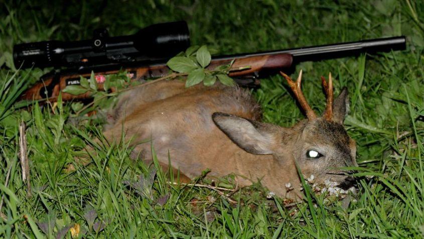 zweiter-bock-Jagd-Mai