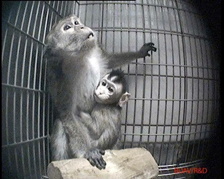 Affen in Tübingen Labor