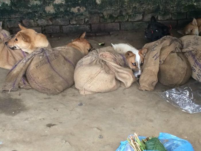 Hundefleisch Indien 3