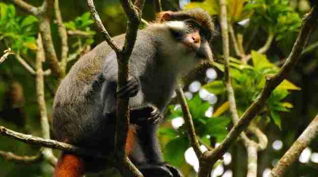 Kameroon wilde Tiere jpg