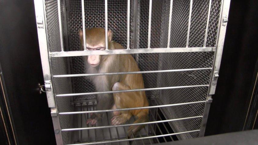 monkey-experiments-3-