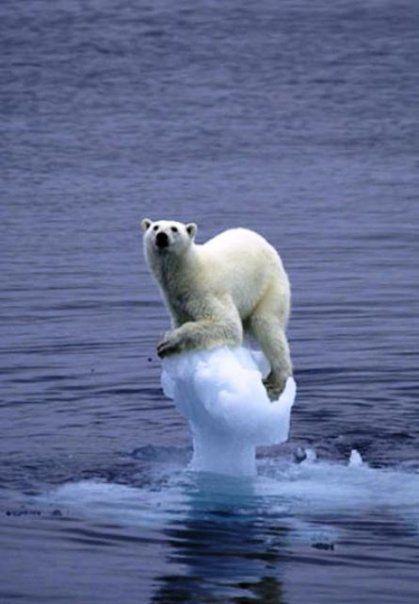 polar bear mushroom ice