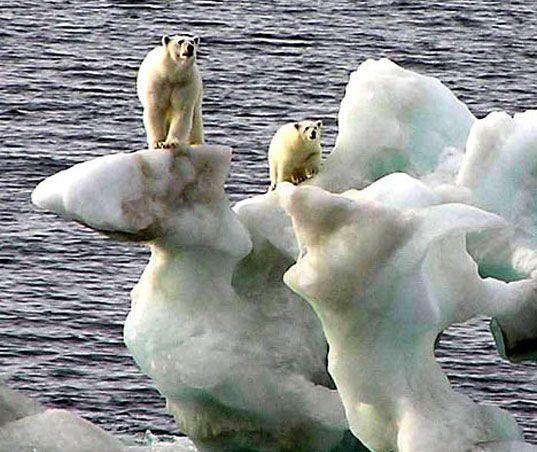 polar bears melting ise