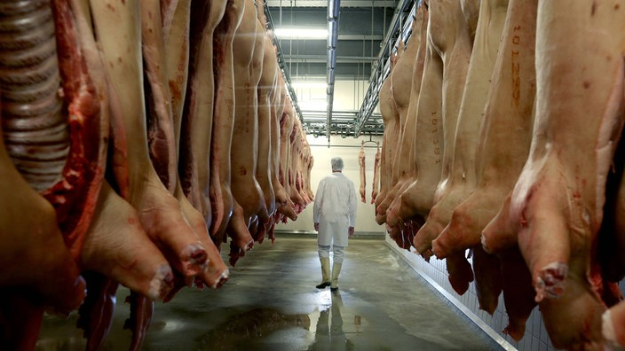 schweine-schlachtung-tönnies100~jpg