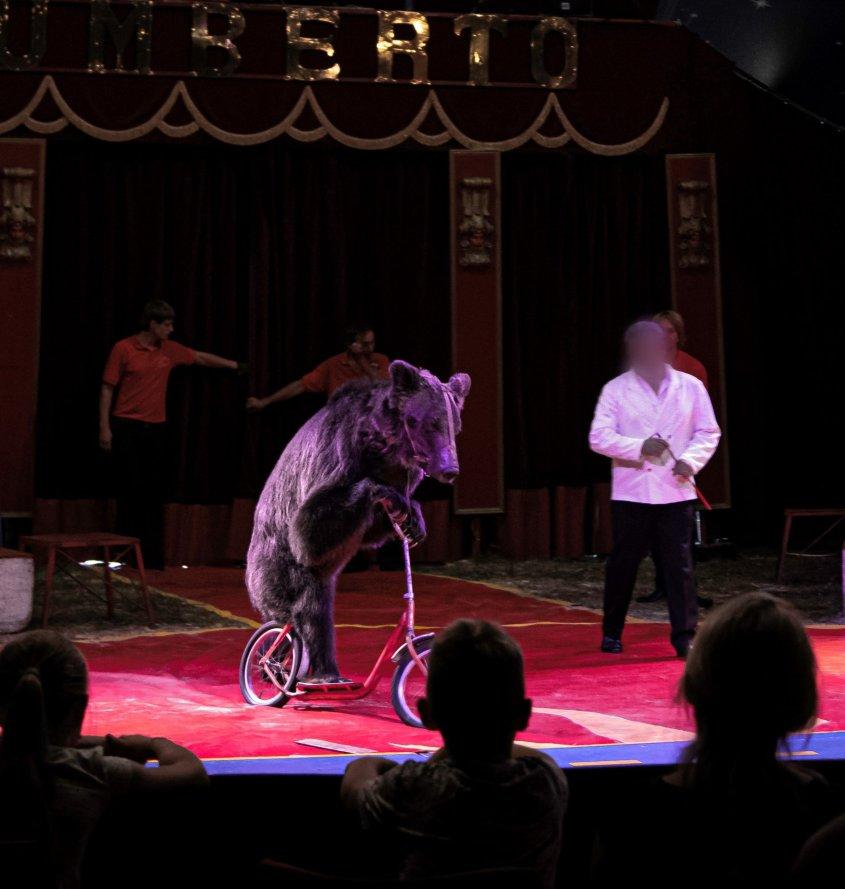 zirkus frankreich bär auf rad