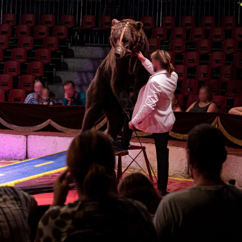 zirkus frankreich bär und dompteur o