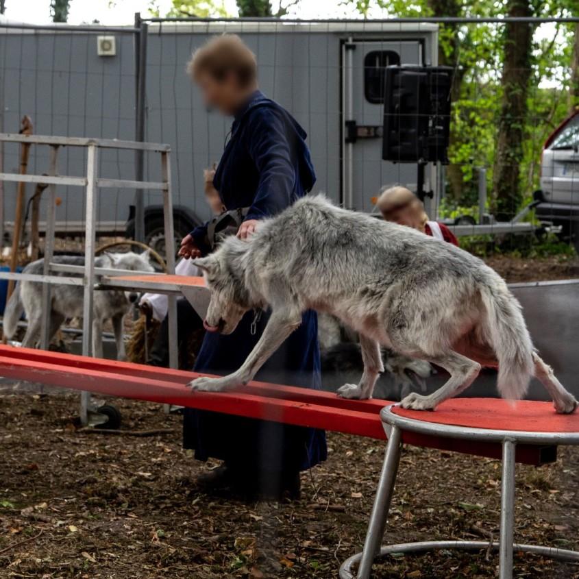 zirkus frankreich wolf