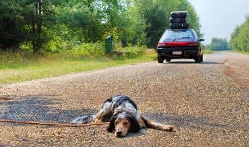 Hund Urlaub verlassenjpg