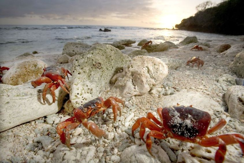 Tauchen / Christmas Island
