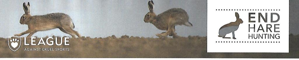 This image has an empty alt attribute; its file name is lacs-hare-2.jpg