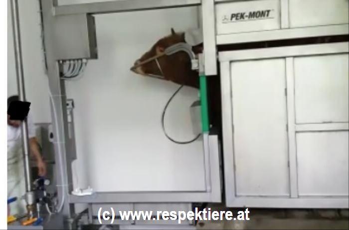 schächten österreichjpg