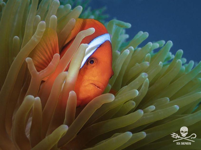 shea shepard corallen jpg