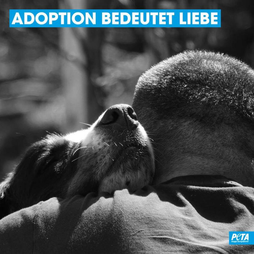 Slogan über adoption