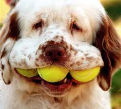 This image has an empty alt attribute; its file name is dogs-mouth.jpg